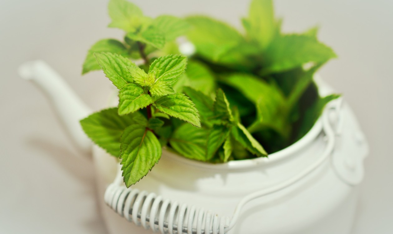 A white teapot filled with mint leaves. Photo.