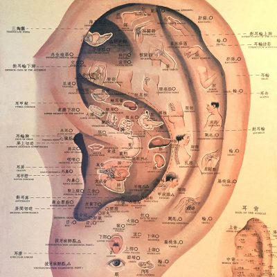Ear-IIllustration_Updated_low-res
