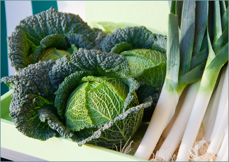 cabbage-and-leeks