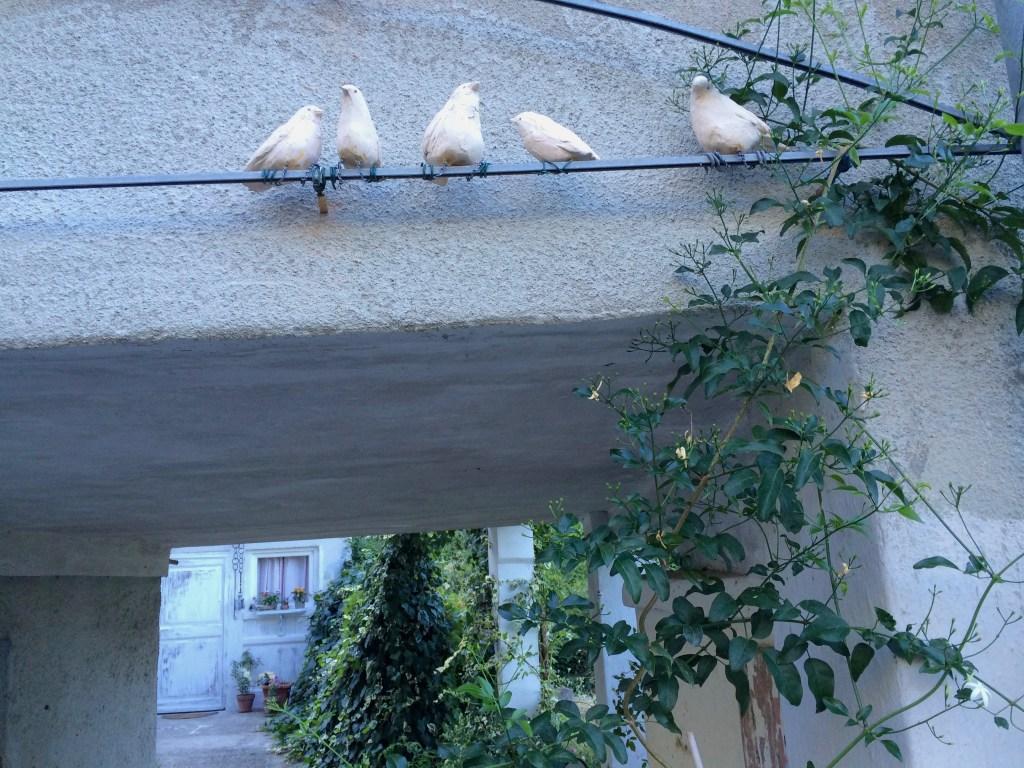 Artist's birds