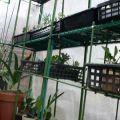サボタニの温室への移動完了