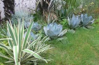 アガベの庭