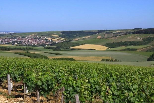 saintbris vignes bourgogne yonne