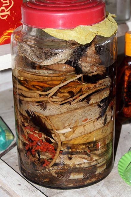 Comment fabriquer de l'alcool de serpent! (J'y ai goûté!)