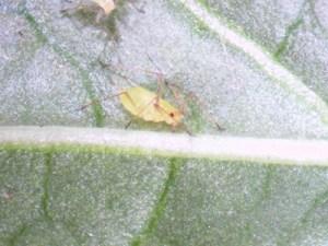 Aug 22 Figure 2