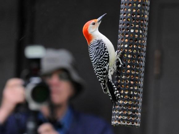Birding2_Southwest