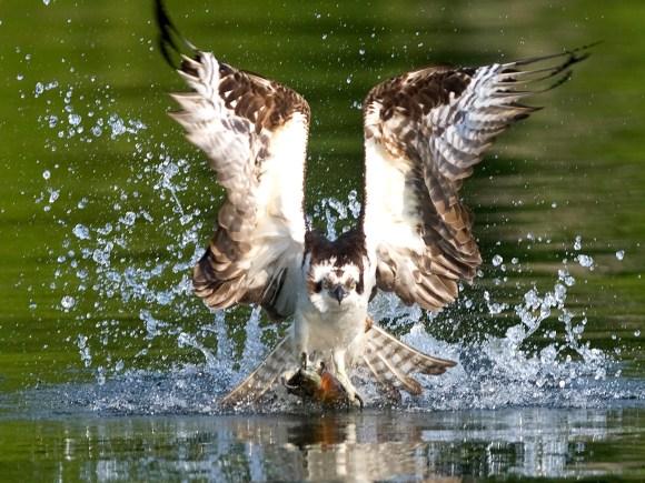 Birding3_Kawarthas