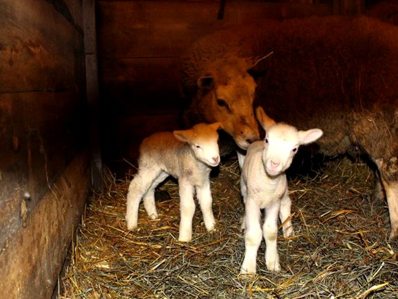 FarmStays4_DwyersFarm