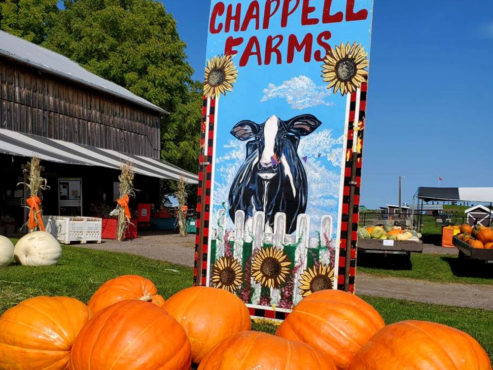 a pile of pumpkins in front of a sign and painting of a cow