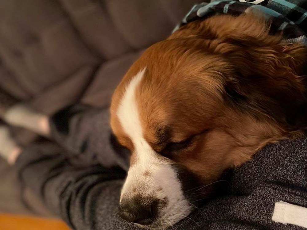 A dog wearing a bandana cuddles with its owner