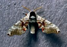 A moth, I thought it warranted a decent shot.