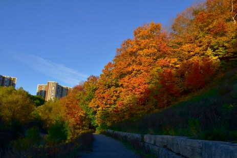 Fall colours on the East Don.