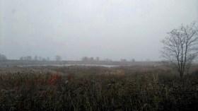The wetlands.
