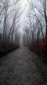 The long road forward.