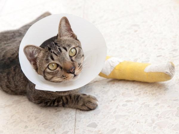 free cat sudbury ontario # 6