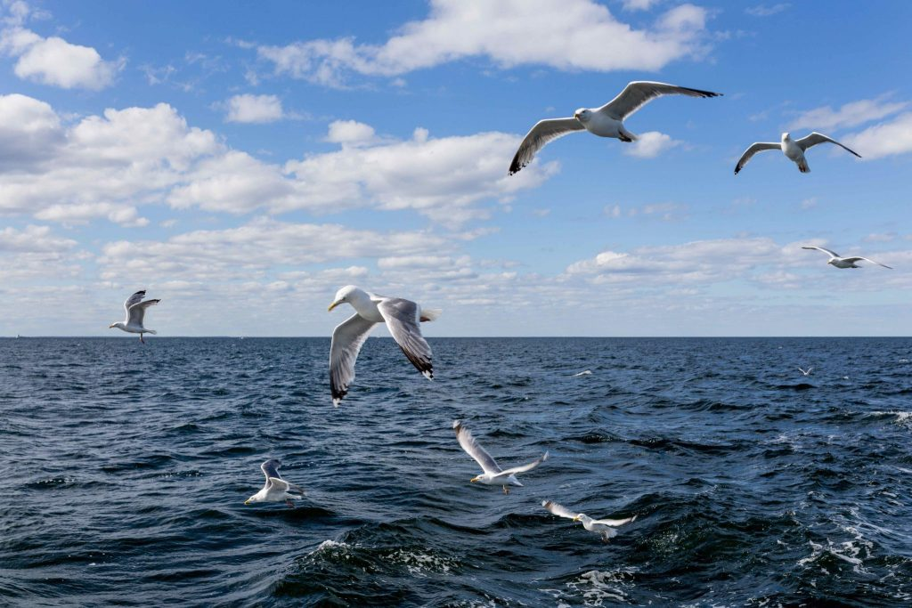 Meeuwen vliegen boven de zee Evia Griekenland