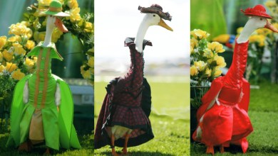صور لعرض ازياء البط