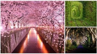 سحر و جمال الاشجار في العالم