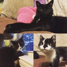 The felines of the house, September 2016