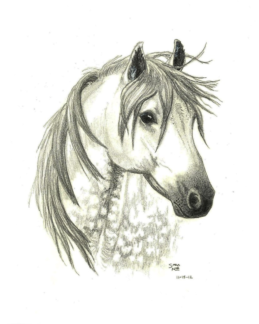 Eclipse Shadow Rider pencil artwork horse Sara A. Noe