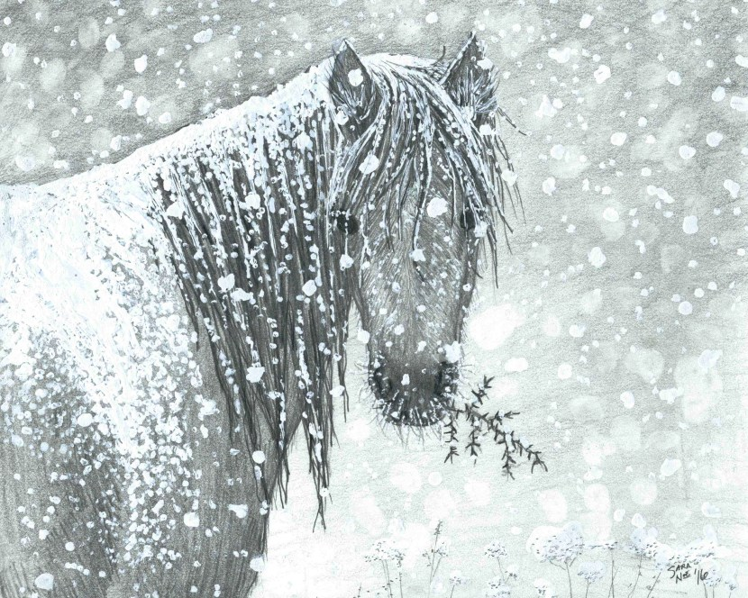 Pencil artwork horse blizzard Sara A. Noe