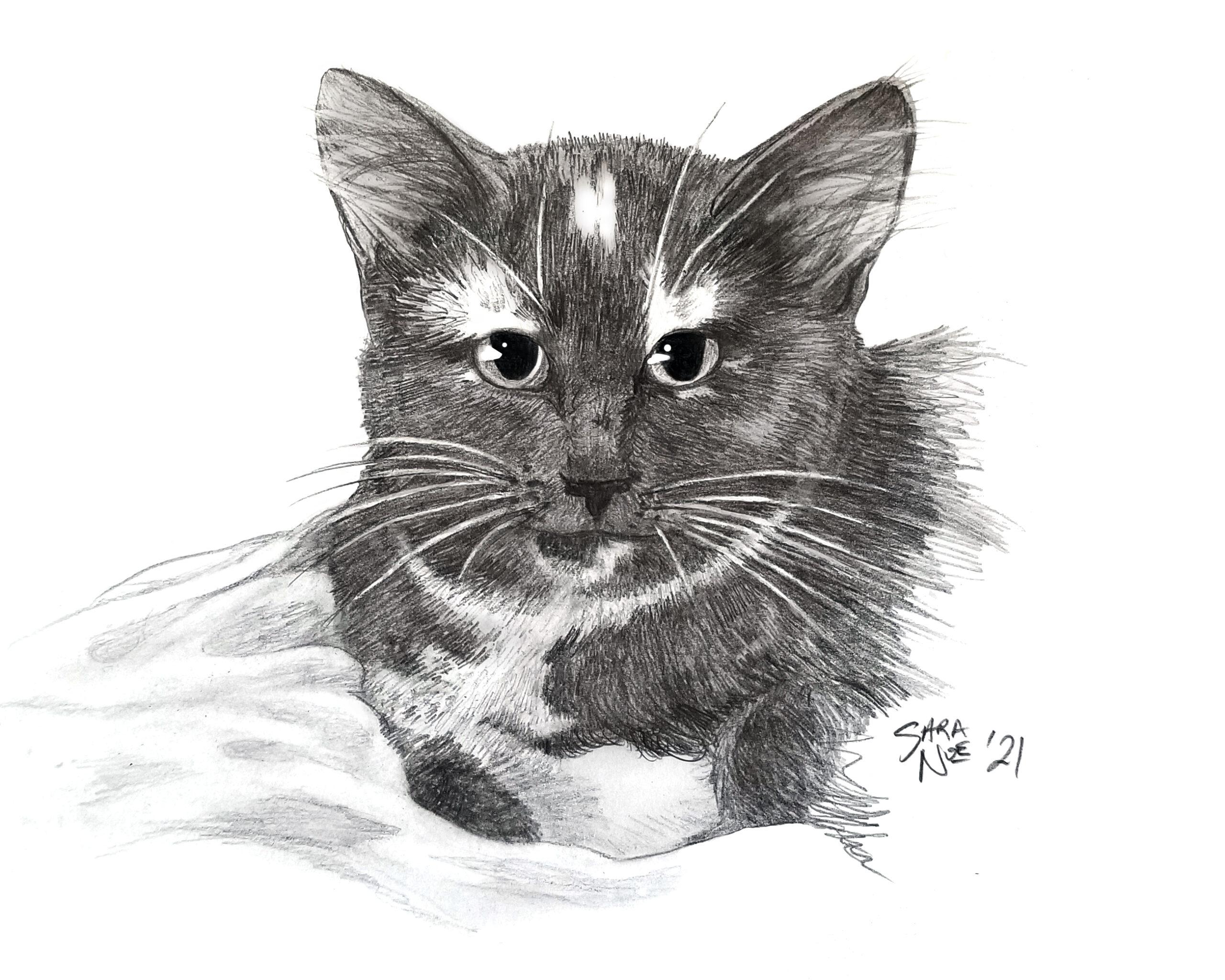 Pencil sketch of calico cat by Sara A. Noe