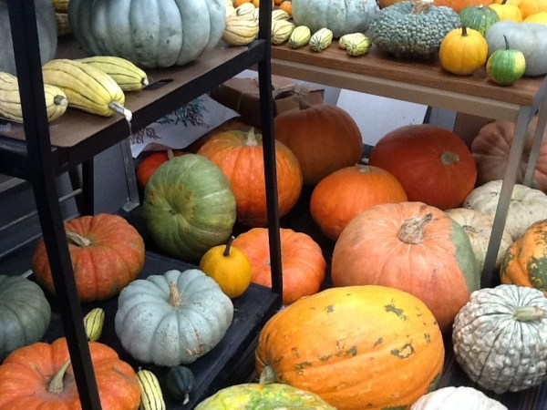 Pumpkins in July Busch Gardens Tampa Bay Is Growing quotThe
