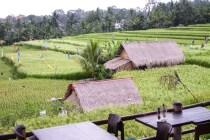 Bali Rice Walk-11