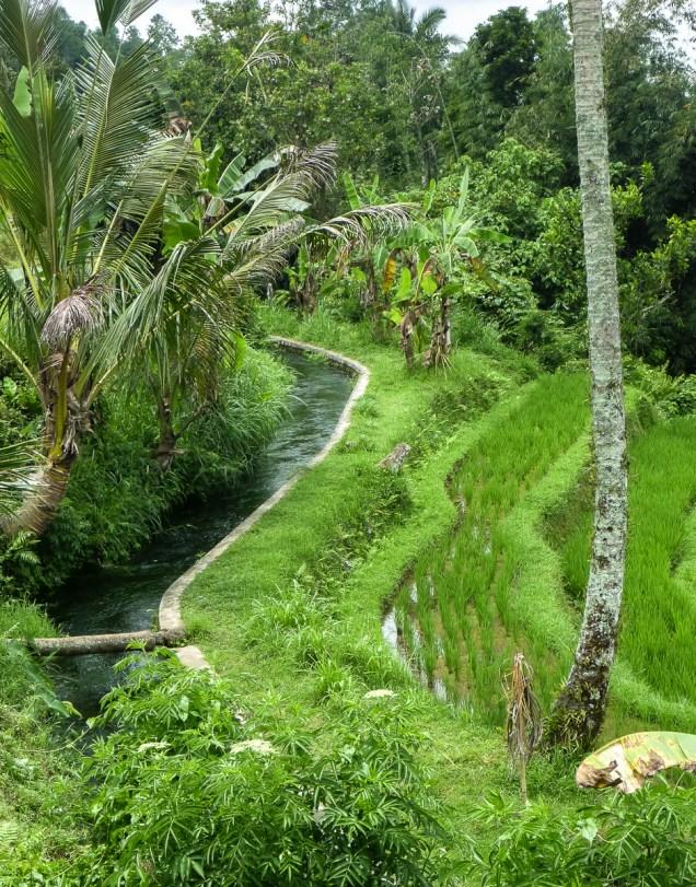 Bali Rice Walk-19