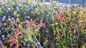 Wildflowers colors