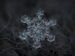 o-SNOW-900 (1)
