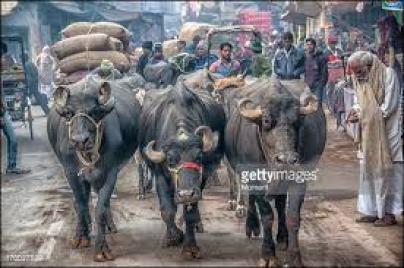 1-31 - India street scene