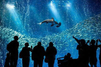 8-7 - Monterey Aquarium