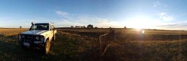 Farm work in the paddock