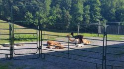Misty Acres Alpaca Farm