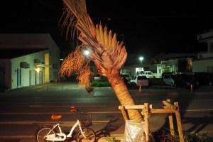 店の前には台風で傾いた木がある
