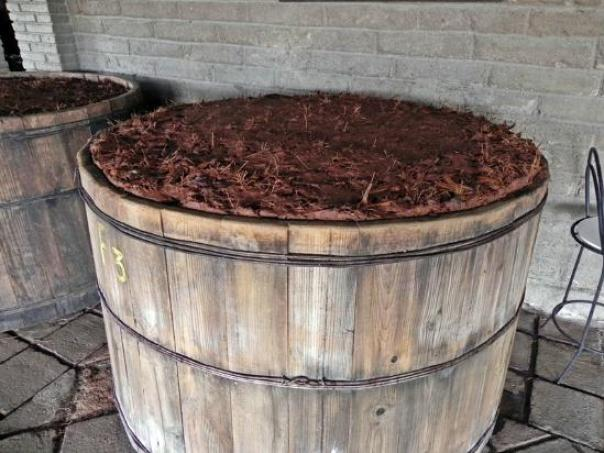 mezcal-fermentation-process