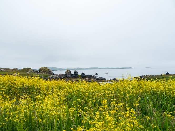 Islay nature