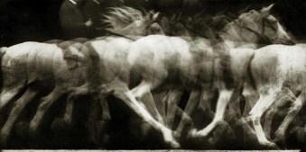 Étienne Jules Marey Cheval blanc monté, locomotion du cheval, expérience 4 1886 Chronophotograph