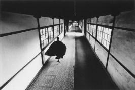 ikko-narahara_zen-no-09-1969
