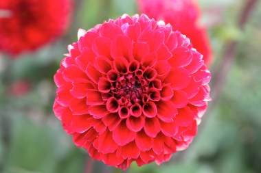 Flower at Botanisk Have