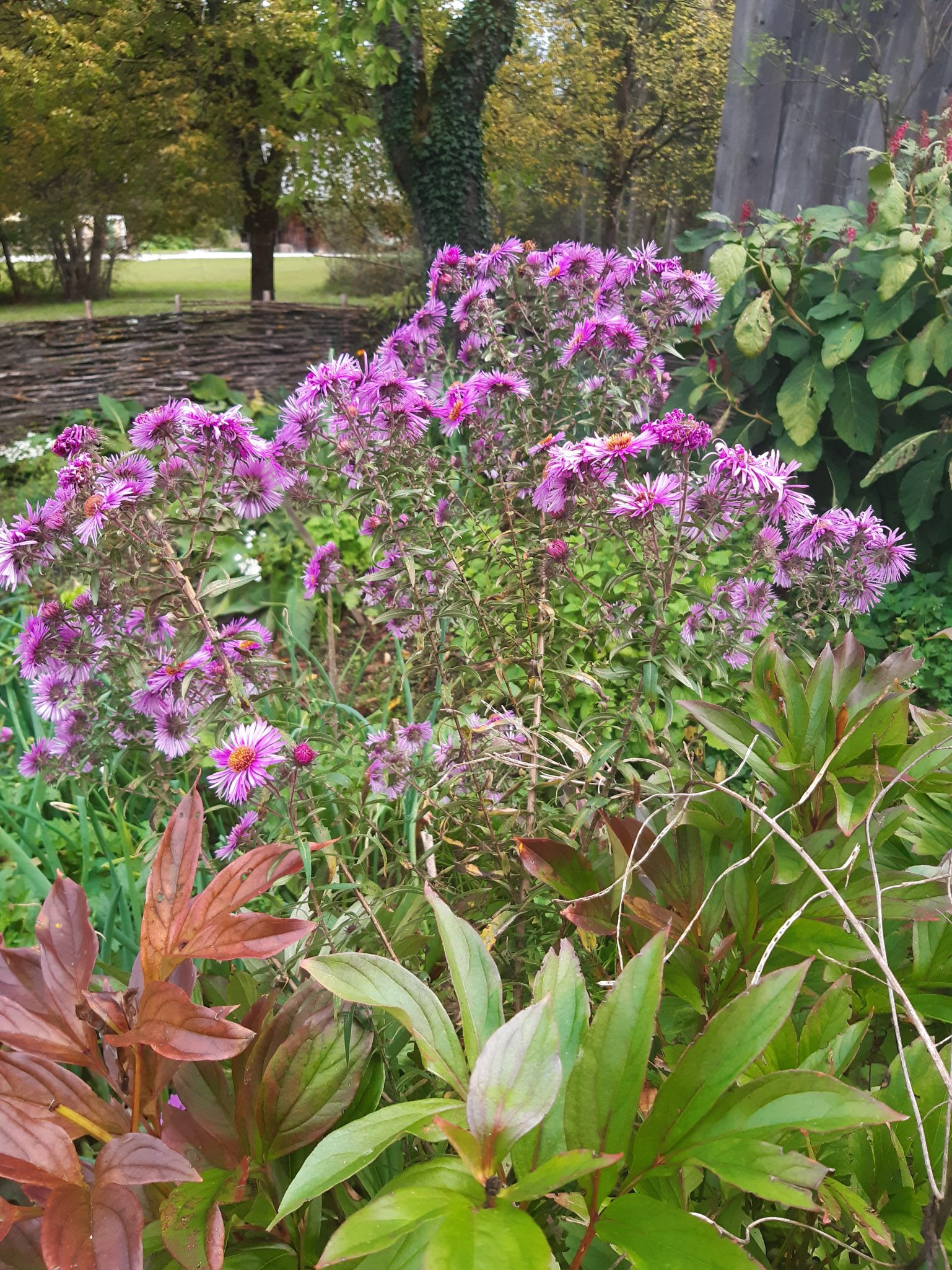 Garten Blume