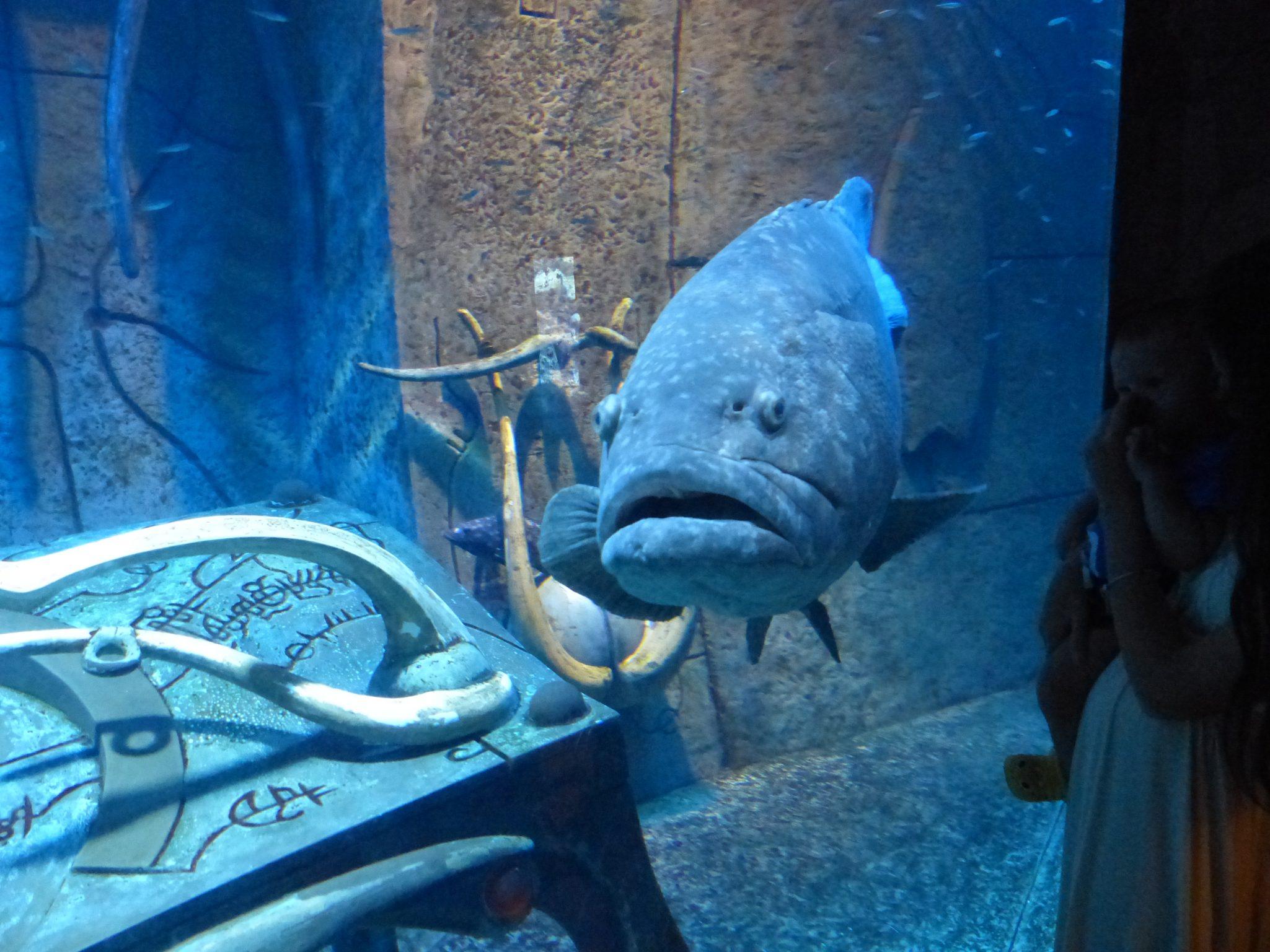 Aquarium beim Atlantis Hotel Dubai
