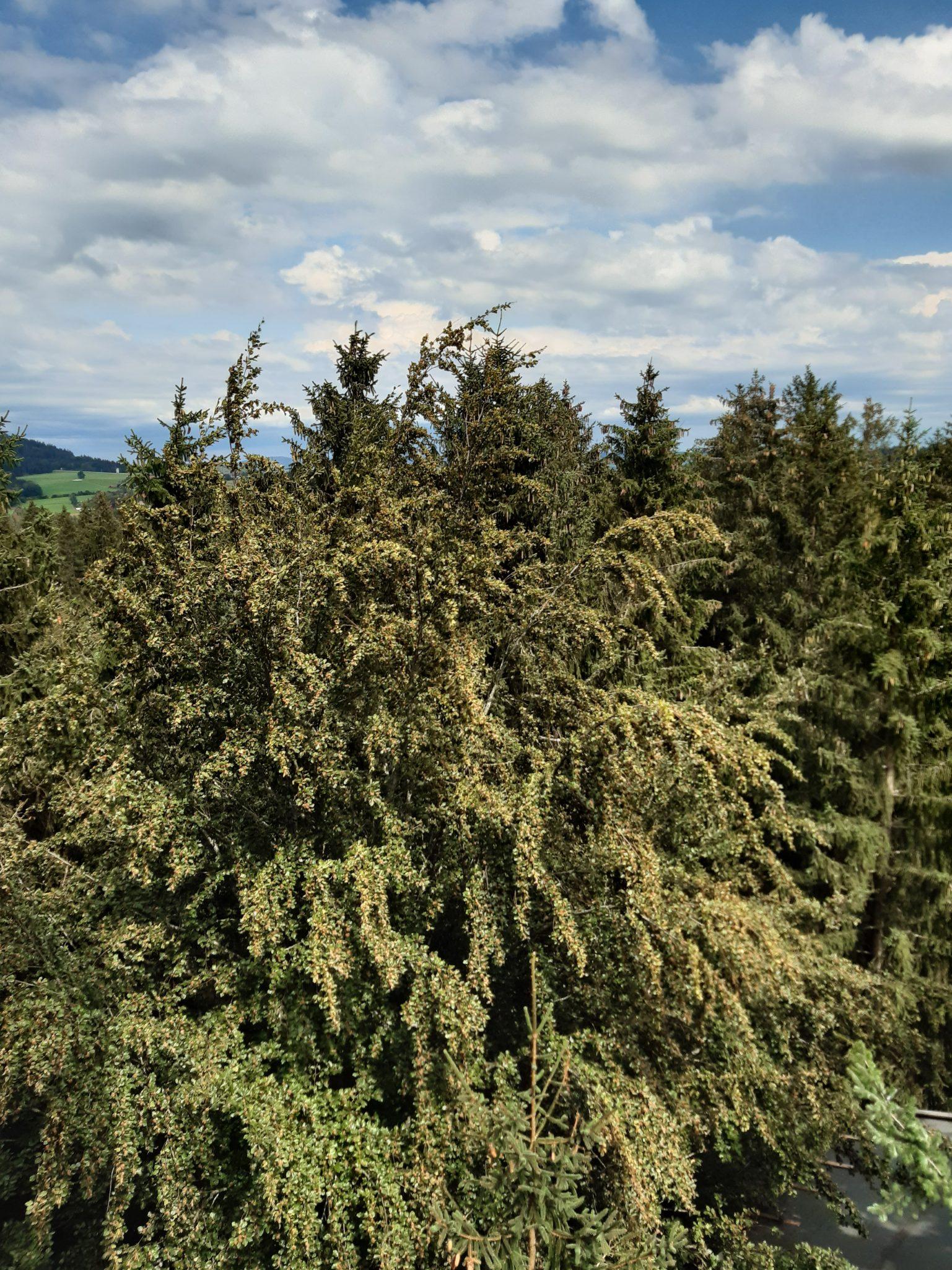 Aussicht über den Bäumen