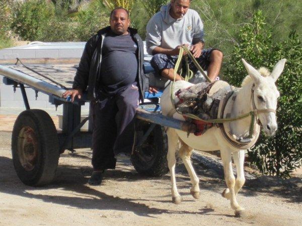 egypt2010a1347