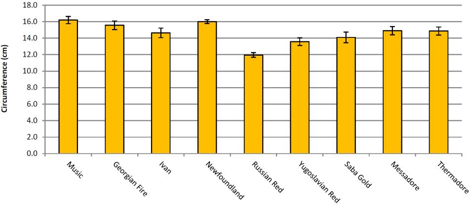 Fig6-BulbCircumference.PNG