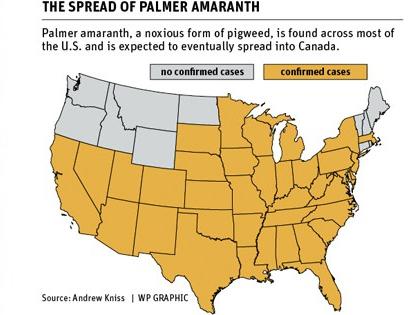 palmer-amaranth-map.jpg