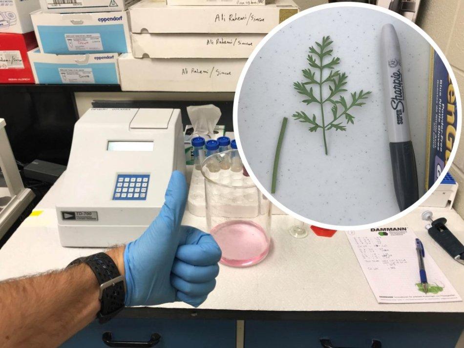Fluorimetry Lab