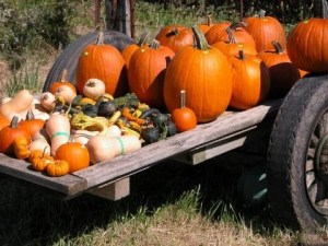 A wagon with pumpkins and squash