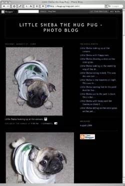 Sheba the Hug Pug's photo blog